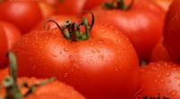 ارزش صادرات رب گوجه، سه برابر بیشتر از خودرو